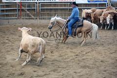 BJ1A4202 (yoann coin) Tags: en horse france western cutting bons equitation ccha chablais ncha charmot