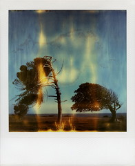 Flaming Trees (tobysx70) Tags: ocean california ca city blue trees toby sky cliff film polaroid sx70 photography spring san december day pacific time 26 top flames saturday pedro april instant week boxing sunken hancock expired day7 zero flaming tz timezero roid 2016 2015 0906 polaroidweek roidweek 122615 polawalk