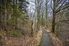 The Silent Path (dietmar-schwanitz) Tags: wood nature forest germany deutschland path natur wald harz weg goslar lightroom pfad niedersachsen lowersaxony dietmarschwanitz nikond750 nikonafsnikkor24120mmf40ged
