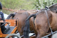 IMG_8564 (dreiwn) Tags: horse germany carriage kutsche pony german horseshow pferde pferd horsecarriage dressage pferdekutsche dressur heste dressyr pferdekopf dressuur ridingarena horsedriving pferdesport reitplatz reitverein fahrturnier dressurpferd dressurprfung gespannfahren