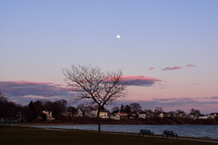 Moon and Tree (E. Aguedo) Tags: park new winter sunset england moon tree water clouds bench island ngc east providence rhode sabin