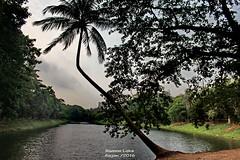 '...       ...' (sajan-164) Tags: lake tree classic coconut dhaka bangladesh ramna sajan164