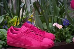 "Puma Sude + ""Crop circle"" rose... (konsortium.avignon) Tags: pink puma suede cropcircle konsortium kyliejenner uploaded:by=flickstagram instagram:photo=1217278329961491101329377217"