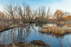 Day Light In The Swamp (vernonbone) Tags: ontario landscape outside nikon eastpoint d3200 april2016