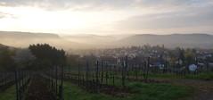 vor dem Frhstck (o_be_lix) Tags: outdoors morgen tal draussen weinberg gegenlicht beilstein