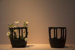 Nature jar (elenamalossini) Tags: life light italy plant milan flower macro green nature daisies project design nikon details simplicity jar delicate decor fragility