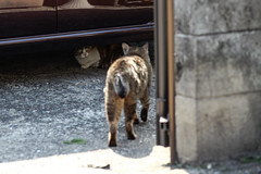 (ogizooo) Tags: cat canon  straycat  streetsnap ef100mmf2usm  5dmark2