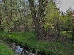 BS-Rningen, Natur pur (bleibend) Tags: nature bs natur olympus braunschweig omd 2016 m43 mft rningen em5 olympusomd olympusem5 bsrningen