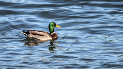 IMG_1264810 (Uday Pratti) Tags: seattle summer redmond sammamish lakesammamish idylwoodpark