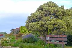 Bluff Hill Domain (gec21) Tags: newzealand panasonic nz napier hawkesbay 2015 dmctz20