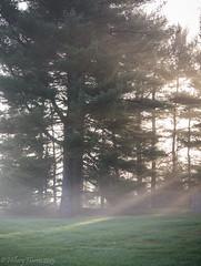 IMG_1923 (hillarycharris) Tags: morning trees mist nature fog sunrise canon landscape outdoors foggy tamron morningmist naturephotography morningfog mistymorning treesinfog foggytrees foggylandscape sunrisephotography treesinmist mistylandscape canonrebelt5 canoneost5