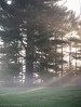IMG_1923 (hillarycharris) Tags: morning trees mist nature fog sunrise canon landscape outdoors foggy tamron morningmist naturephotography morningfog mistymorning treesinfog foggytrees foggylandscape sunrisephotography treesinmist mistylandscape canonrebelt5 canoneost5
