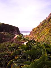 bog pron (branden bg) Tags: ocean life california road trip west orchid beach cali night lights oakland bay coast highway pacific culture bigsur bog morro ventura pfeiffer