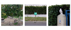 animals (yaya13baut) Tags: street color animals photography triptych streetphotography streetlife animaux rue triptyque streetanimals