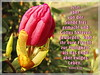 Frucht zur Heiligkeit / fruit of sanctification (Martin Volpert) Tags: flower fleur christ flor bible christianity blume fiore blüte frucht bibel blomster virág lore biblia bloem blóm floro flos glaube bijbel kvet kukka cvijet glauben christentum bláth ewigesleben zieds bibelvers õis תנך blome žiedas bibelverskarte heiligkeit mavo43