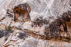 Natural Bridges - Continental Divide Trail.jpg (gaillard.galopere) Tags: travel cliff usa tree water river utah sandstone roadtrip canyon naturalbridge erosion explore anasazi nationalmonument discover 2015 resistant decouverte