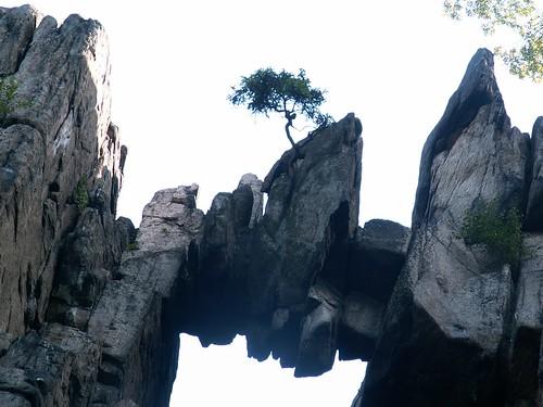 Na skałach zamykających okno rośnie drzewo