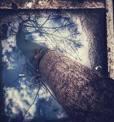 Senza radici non si vola (Federica Frisoli) Tags: sky tree water mirror nuvole surreal inner cielo inside anima albero acqua riflessi radici metafora introspection introspezione visioni