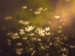 The morning (cristina.g216) Tags: morning flowers flores maana flare campo