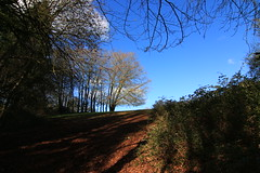Afternoon sun (shaunmartin366) Tags: trees bristol shadows hill bank bluesky naturereserve goldenvalley afternoonsun wick