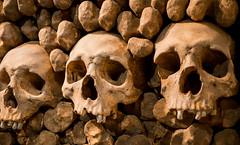 Skulls and Bones (p.niebergall) Tags: skulls bones mnster fr knochen naturkunde totenkpfe gebeine lwlmuseum