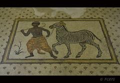 L'home que porta una zebra (PCB75) Tags: home museum turkey vacances trkiye urfa mosaics precious zebra turquia greekmythology negre anatolia ainhoa 2015 mitologia hippolyte anadolu amazones archaeologists decoraci antiope huntingparty anlurfa caar tessella penthesileia guerreres cacera musiva opustessellatum tesselles opustesellatum haleplibahce museudelmosaic amazonwarriorqueens melanip 3rdto4thcenturies seglesiiiiv partidadecaa