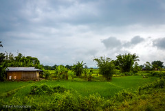 Landscape from Assam (Paul Nicodemus) Tags: travel people mountains rain clouds landscapes skies azure adventure journey solo odyssey assam himalayas valleys unplanned tawang natives bomdila tezpur westbengal arunachalpradesh bumlapass selapass paulartography paulnicodemus