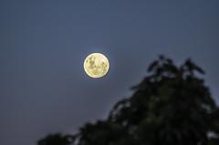 Luna al ocaso (Agustín Ignacio Nicolás Vera Valle-Lugine) Tags: chile moon atardecer nikon paisaje luna lanscape nikonm