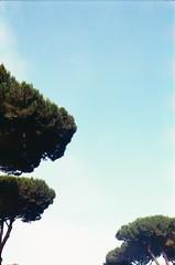 terme di caracalla, july 2014 (Tefilo de Sales) Tags: blue trees summer sky italy rome roma film pine analog 35mm 50mm nikon italia kodak expired nikkormat terme analogic ancientrome kodak200 caracalla termedicaracalla nikkormatel