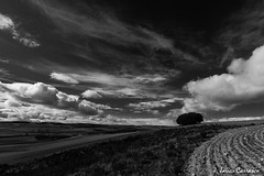 Fuerzas (AvideCai) Tags: blancoynegro arbol paisaje bn cielo nubes 7d sigma1020 avidecai