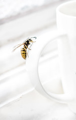 coffee fan (bruce.marshall2@btinternet.com) Tags: white macro cup coffee closeup danger handle wasp coffeecup insects climbing highkey brucemarshall