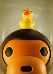 Bert 74/366 (zamburak) Tags: yellow toy actionfigure duck bert safari ape yamaguchi affi duckies babymilo kaiyodo bathingape bape revoltech oneobject365daysproject goodluckminis seriesno115