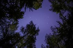 Ursa Major overhead | Gulbineliai | Lithuania (trimailov) Tags: trees sky pine night forest dark stars landscape major woods nightscape clear pines moonlight ursa constelation starlight