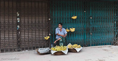 Bangladeshi man selling bananas, Hindu Street/Shankaria Bazaar, Dhaka, Bangladesh, Indian Sub-Continent, Asia (thousandvoyages) Tags: streetart man male men asia adult bananas dhaka rickshaw hindu selling cha bangladesh olddhaka rickshawart purandhaka hindus indiansubcontinent shankaria richtradition shankariabazaar colonialperiodhindupeople dhakahindustreet colorfulhindustreet