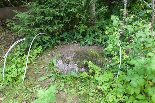 Камень, на котором молился пр Серафим Вырицкий