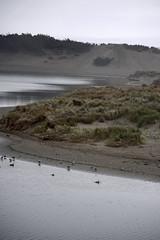 _DSC0826-sonoma-coast-f (posyche) Tags: ocean seagulls water waves gulls sonoma shoreline highway1 grasses sonomacoast ca1 wildgrasses