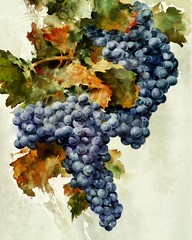 """Grape Poster"" by Morten E Solberg  www.mortenesolberg.com  #wine #vineyard #grapes #colorful #fineart #artist #paintings #paint #myart #art #watercolorpainting #watercolours #watercolor #acrylicpaintings #painter #talented #delish #winery (mortensolberg1) Tags: art watercolor vineyard colorful paint artist wine fineart paintings winery painter grapes myart watercolours talented delish watercolorpainting acrylicpaintings"