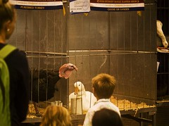Easter Show 2016 (phillipdumoulin) Tags: show city food animals turkey easter country sydney australia goose poultry nsw agriculture homebush sydneyolympicpark domesticatedanimals eastershow2016