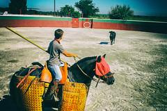 la camargue  cheval (_M_2) Tags: horse cheval camargue 24105l canon6d