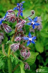 PETALES ET COULEURS (Gilles Poyet photographies) Tags: france fleurs puydedme royat parcbargoin auvergnerhnealpes
