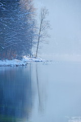Blue mirror (Alpsee, Bayern) (armxesde) Tags: blue winter lake tree water reflections germany bayern deutschland bavaria see wasser pentax blau spiegelung ricoh baum k3 allgu baviera alpsee
