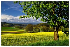 20160424-164454 (lichtschattenjaeger) Tags: yellow landscape gold diesel bio eifel gelb raps biodiesel vulkan getreide gerste weizen benzin hafer biosprit