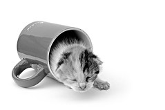nap (brescia, italy) (bloodybee) Tags: bw white cup animal cat fun cub kitten nap sleep humor n kitty whiskers newborn mug letter 52weeksproject azproject