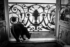 Le Chat (smellerbee) Tags: summer vacation blackandwhite bw france monochrome cat outdoors blackwhite nice indoors weathered verandah