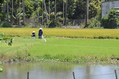 Workers in a rice paddy (armadillo1945) Tags: water workers colours rice paddy subtropical