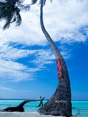 Maafushi beach, Maldives (n_dangthuy) Tags: sea seascape beach coconut indianocean bluesky whitesand bikinibeach