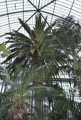 Jardin des Serres, Auteuil (carolyngifford) Tags: paris palm glasshouses auteuil jardindesserres