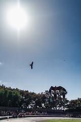 At Jungle Park (Fjola Dogg) Tags: vacation espaa holiday bird birds animal animals canon island zoo spain europe tenerife fugl evropa dr fuglar junglepark evrpa fjoladogg fjladgg canonpowershotg7x canong7x