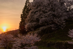 34Butsuryuji Temple (anglo10) Tags: sunset japan cherry temple
