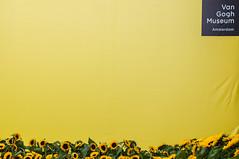 Van Gogh Museum (Emiel Dekker) Tags: netherlands amsterdam yellow museumplein sony nederland sunflowers zonnebloemen geel vangoghmuseum a57
